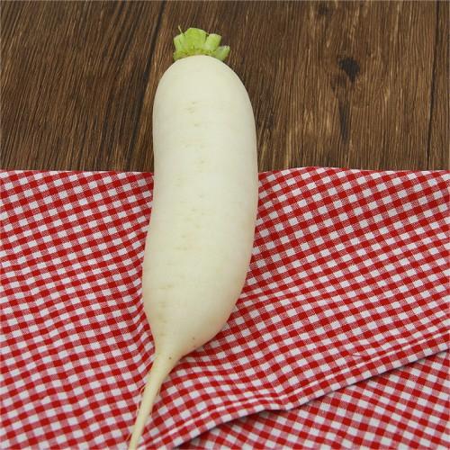 白萝卜约750g