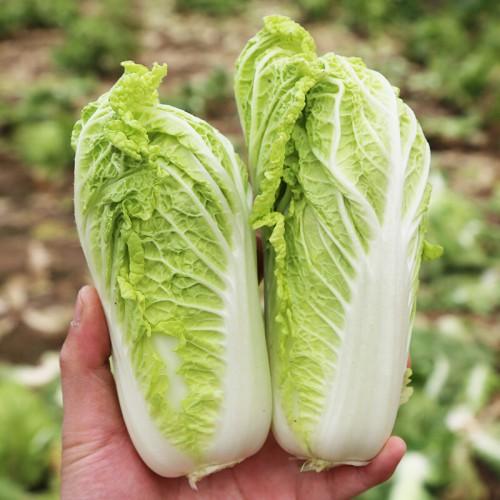 黄心白菜1个(约750g)